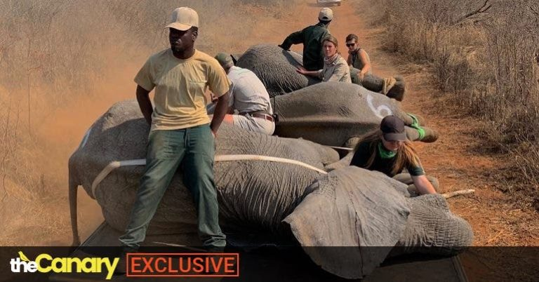 This magnificent rescue of a family of African elephants is an example to the world