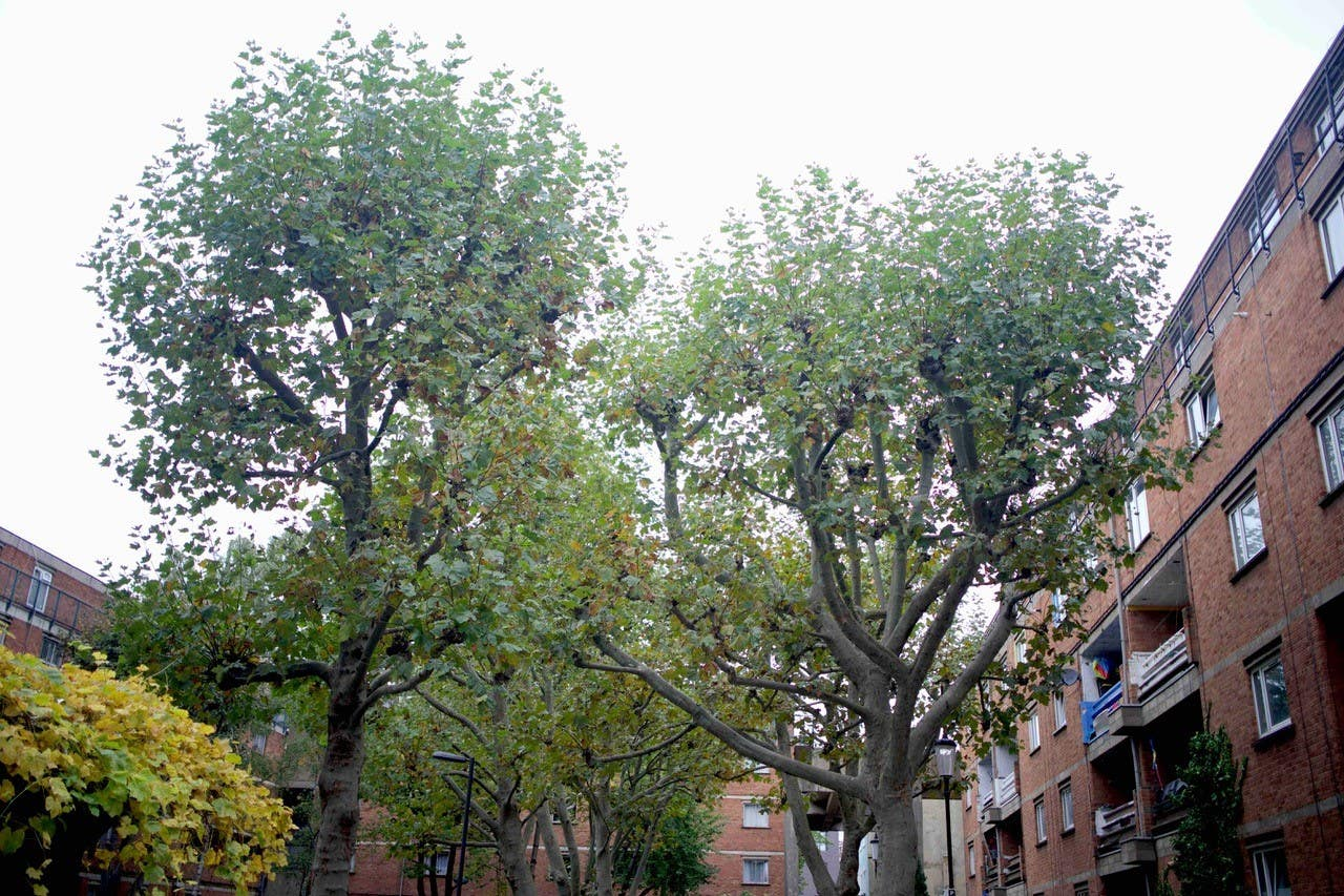 Residents criticise developer over 'absolutely disgusting' plans to remove 42 trees for new flats