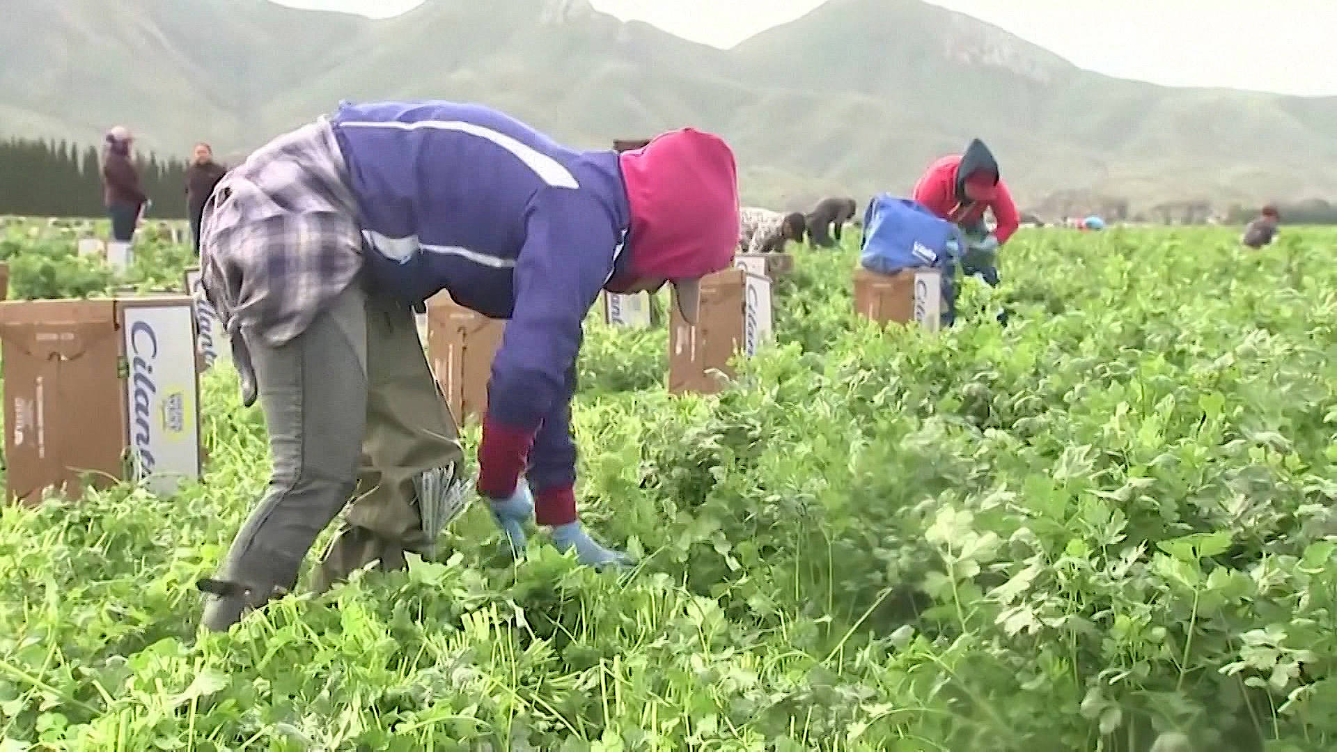 Read more about the article Latinx Farmworkers Risk Their Lives During Pandemic. Many Now Struggle to Access Vaccines