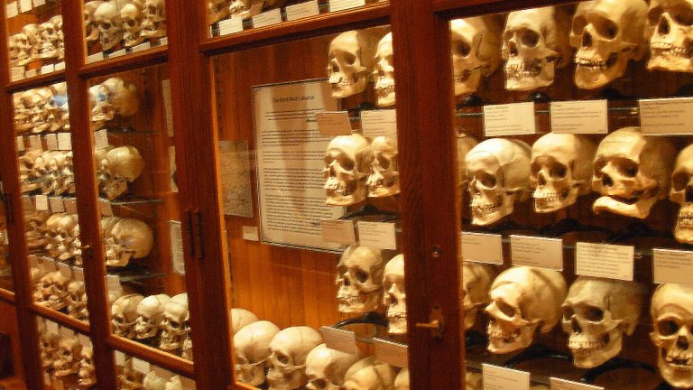 Read more about the article Bone Rooms: How Elite Schools and Museums Amassed Black and Native Human Remains Without Consent