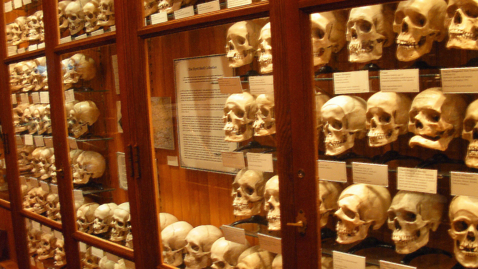 You are currently viewing Bone Rooms: How Elite Schools and Museums Amassed Black and Native Human Remains Without Consent