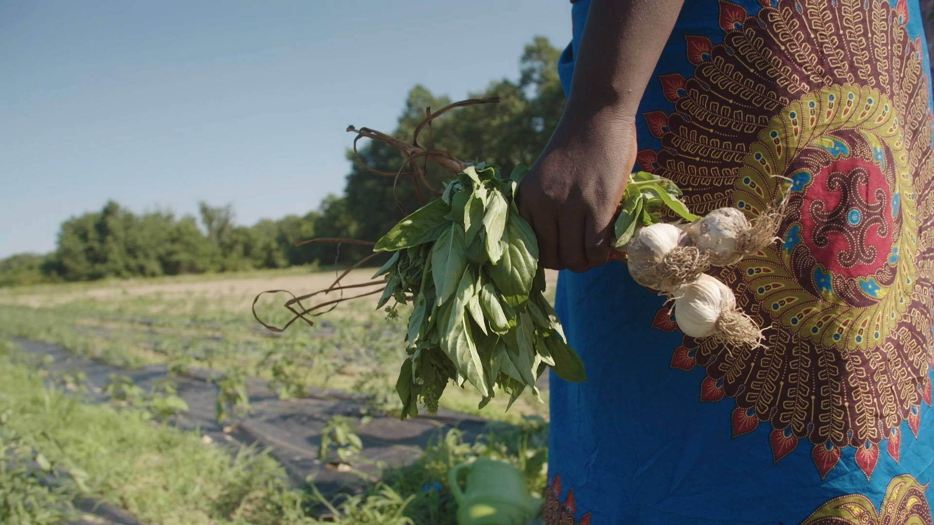 """Read more about the article """"The Ants and the Grasshopper"""": Raj Patel's New Film Aims to """"Decolonize"""" Climate & Health Solutions"""