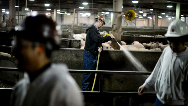 """Read more about the article """"On the Kill Floors"""": Essential Workers in Meatpacking Plants Still Lack Safety & COVID Protections"""